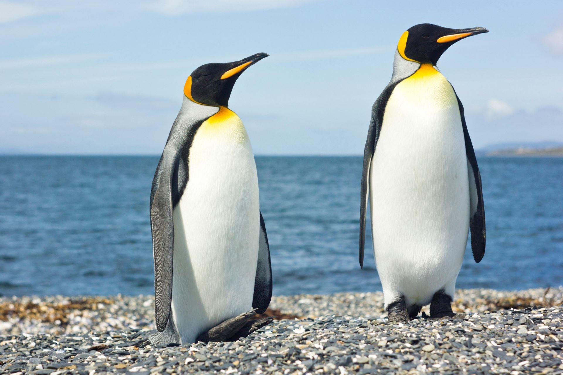 Os 9 melhores lugares para ver os pinguins na Argentina