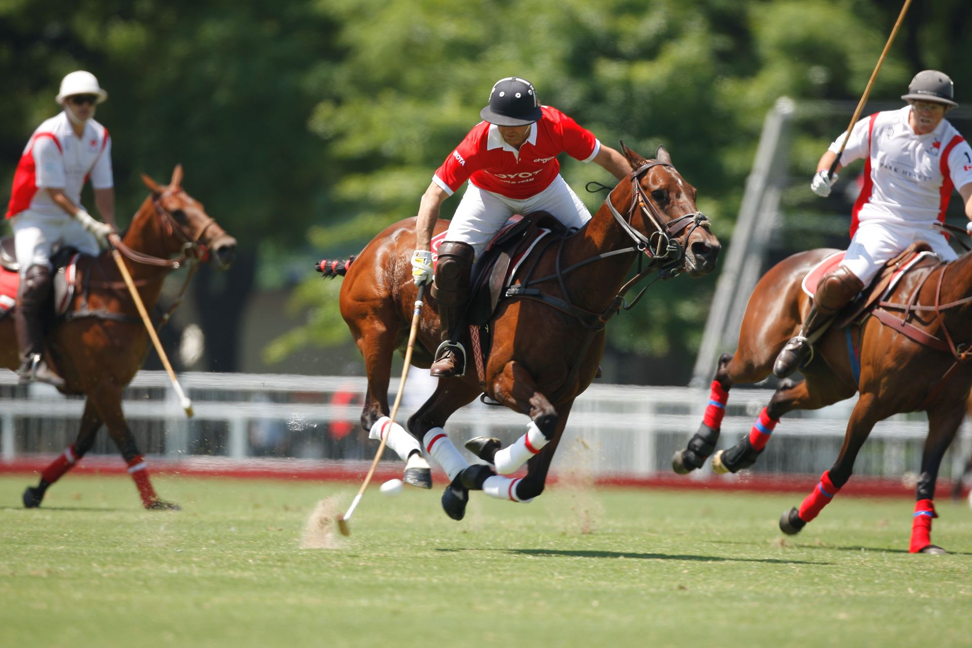 What You Should Know About Polo