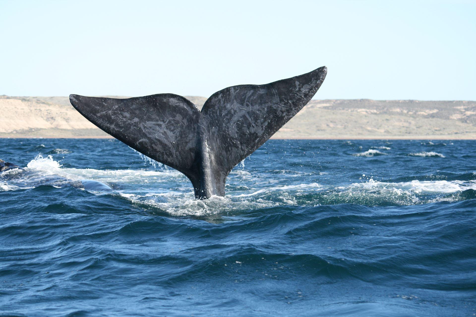 Que animais você pode ver na Península Valdes