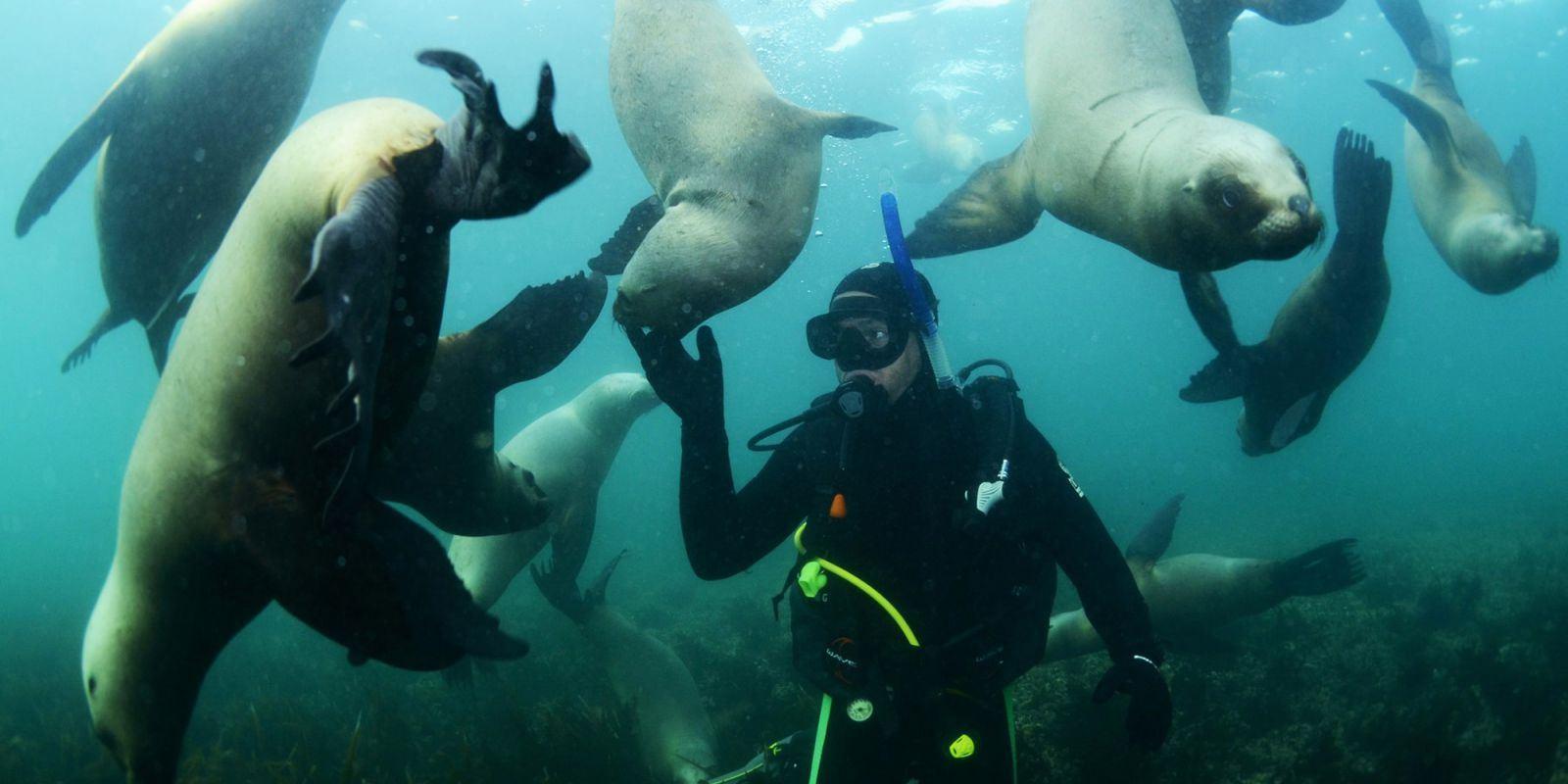 Nade com leões marinhos em Puerto Madryn