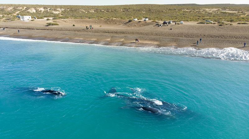 Península Valdés: Um Éden No Mar
