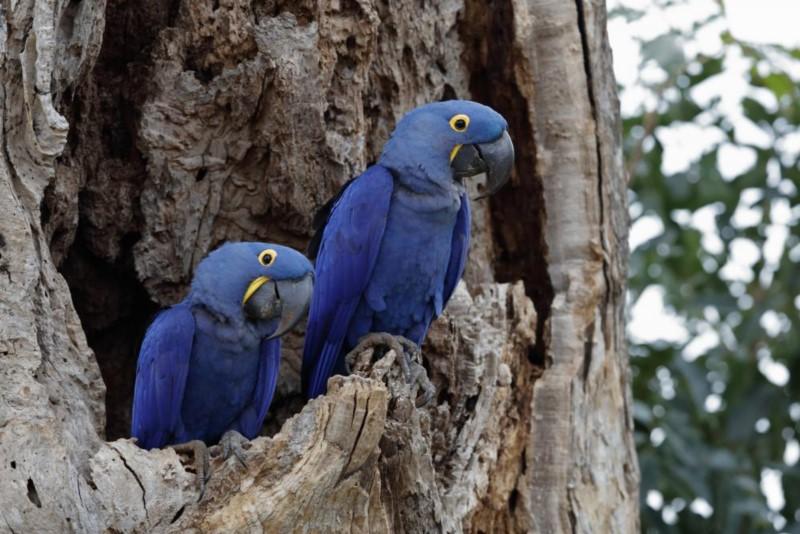 Discovering A Treasure In Macaws Hole (Buraco Das Araras), Brazil