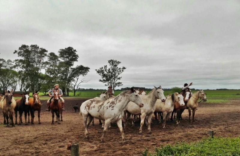 Estancia Santa Susana In Argentina Invites You To Share Wonderful Traditions