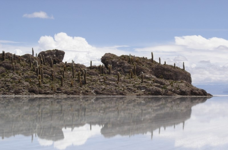 Island Of Incahuasi, In The Salar De Uyuni, Bolivia