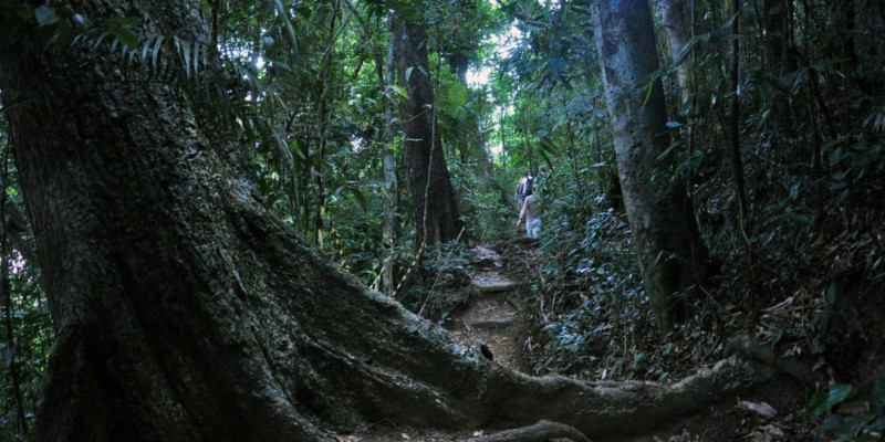 La Floresta Da Tijuca Is A Beautiful And Amazing Forest In Rio De Janeiro