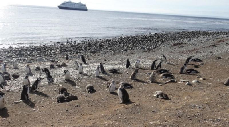 La Felicidad De Visitar La Colonia De Pingüinos Seno Otway