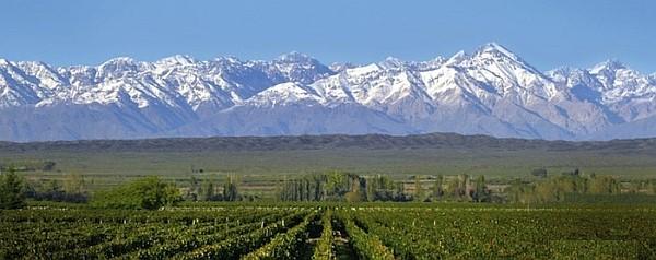Wine In Mendoza